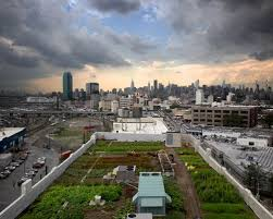 42 000 square feet urban farm created