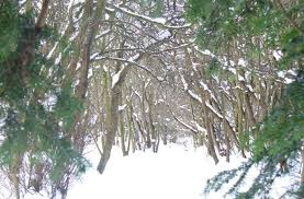 "stopping by woods on a snowy evening"" edsitement winter fairyland parts of these woods """
