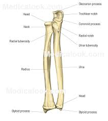 Small Picture 28 best ARTICULATIONS BONES AP VIDEOS images on Pinterest