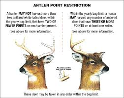 Everything About Deer Antlers