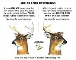Deer Antler Age Chart Everything About Deer Antlers