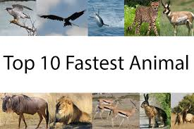 Animal Speed Chart 10 Fastest Animals On Earth Fastest Animals In The World