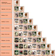 The Taxonomic Classification System Biology For Majors I
