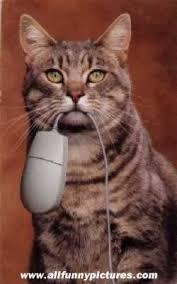 Resultado de imagen de gato cazando raton