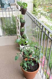 my apartment balcony garden and how to make squirrel repellant spray the spray