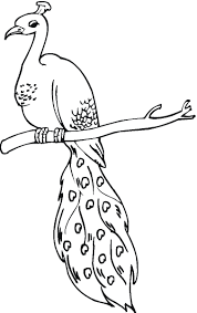 Small Picture Peacock coloring pages on tree branch ColoringStar