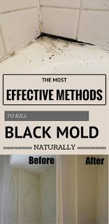 Black Mold In Kitchen 17 Best Ideas About Remove Black Mold On Pinterest Mold In
