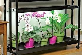 are orchids indoor or outdoor plants