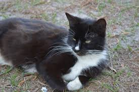 lots of cats tumblr. Modren Tumblr Secretmarkiplier Dont Have Pets Currently But Before I Moved We Had Lots  Of Land And Cats So Here Are The Kitties For Lots Of Cats Tumblr