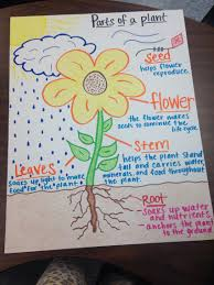 Parts Of A Plant Anchor Chart Science Lessons Primary