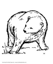 Small Picture Wild Animal Coloring Pages Big Brown Bear Coloring Page and Kids