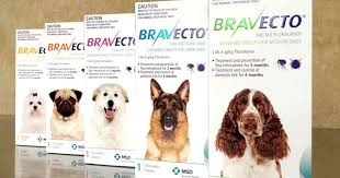 Does Bravecto Kill Dogs? | The Truth Pets Need | Walkerville Vet