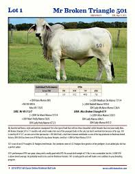 The brahman herd at stars used in this study was composed of purebred and upgraded cattle. Broken Triangle Cattle Company Online Brahman Bull Sale 2016 By Cattle In Motion Llc Issuu