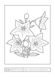 キキョウ主線グレー秋の花無料塗り絵イラストぬりえプリント