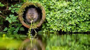 """Résultat de recherche d'images pour """"la nature et les animaux hd"""""""