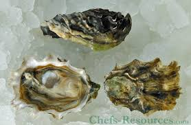 Oyster Identification Chart The 5 Oyster Species Chefs Resources