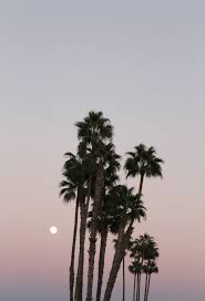 palm trees tumblr vertical. 59 Images About Photography On We Heart It | See More Nature, Flowers And Pink Palm Trees Tumblr Vertical