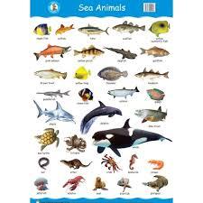 Aquatic Animals Chart Pin By Kathy Sampson On Art Animals Aquatic Animals