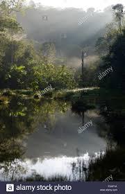 Morning Light Amazon Small Lake In The Morning Light Amazon Rainforest Between