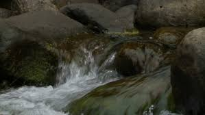 Image result for TREES FOREST CREEK STREAM BOULDERS