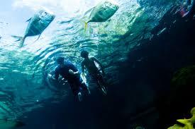 underwater restaurant disney world. Beautiful Disney Image Disney For Underwater Restaurant World