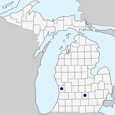 Lathyrus hirsutus - Michigan Flora