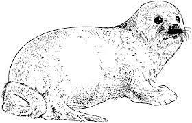 Free Seal Coloring Pages