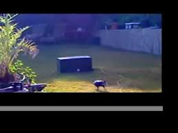 Crow Vending Machine Plans Cool CROW VENDING MACHINE 48 By Steve Joy YouTube
