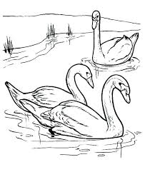 coloring pages swan coloring pages female swans batch wild lake ballet colouring