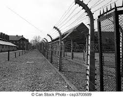 barbed wire fence concentration camp. Modren Concentration Auschwitz Stock Photo Inside Barbed Wire Fence Concentration Camp E