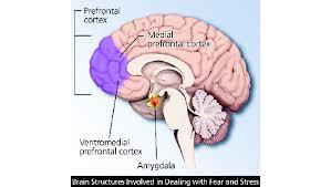 Ptsd Chart Post Traumatic Stress Disorder