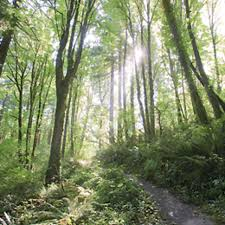 The Wild Edge: Exploring Portland's Forest Park - Backpacker