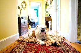 large size of area rugs for homes with pets four legged foot traffic tips to help