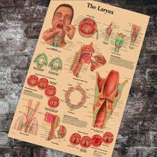 Larynx Chart Us 3 98 Medical Anatomy Anatomical The Larynx Chart Classic Canvas Paintings Vintage Wall Posters Stickers Home Decor Gift In Painting Calligraphy