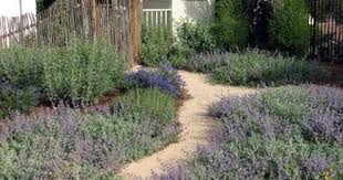 Small Picture Californias Own Native Landscape Design Escondido CA garden