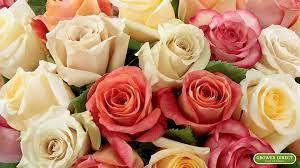 Roses Desktop Wallpapers (54+ best ...