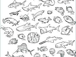 Deep Sea Creatures Coloring Pages Free Printable Sea Animals