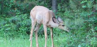 keep deer out of the vegetable garden
