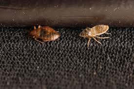 how to find bed bugs in your car and how to get rid of them