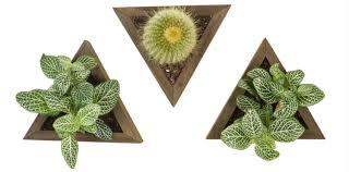 best indoor plants for office. Benefits Of Indoor Plants Best For Office