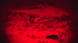 Coyote Hunting At Night With Red Light Mfk Web Tv Episode 3 Calling Bow Hunting Coyotes At Night