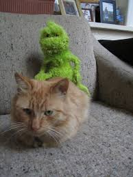Image result for cat dressed like a grinch