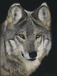Mexican Gray Wolf - Painting Art by Priscilla Baldwin