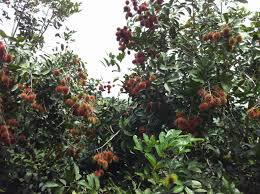 WTF This 1 Tree Grows 7 Different Kinds Of Fruit No Joke Hybrid Fruit Trees For Sale