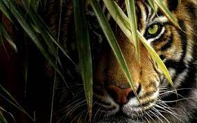 Top tiger wallpaper for laptop HQ ...