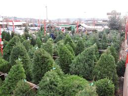 Photo Boy Scouts to start selling Christmas trees this weekend \u2013 My Ballard