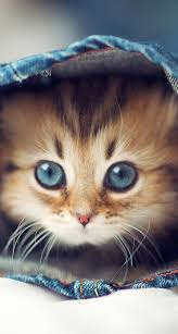 cat wallpaper iphone 5.  Cat Cute Cat Wallpaper For Iphone Free Download Intended Cat Wallpaper Iphone 5 K