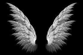 angel wild black wallpapers