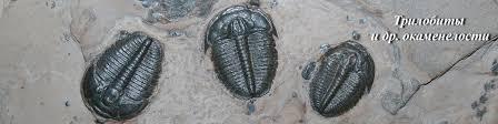 Трилобиты. Палеонтология | ВКонтакте