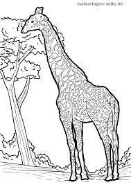 Kleurplaat Giraf Gratis Kleurpaginas Om Te Downloaden